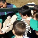Escolares disfrutando en la Granja Escuela