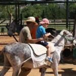 Un menor pasea en burro en la G. Escuela San Buenaventura